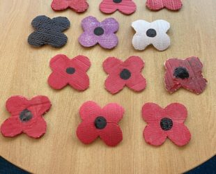 Colourful Poppies In Redland